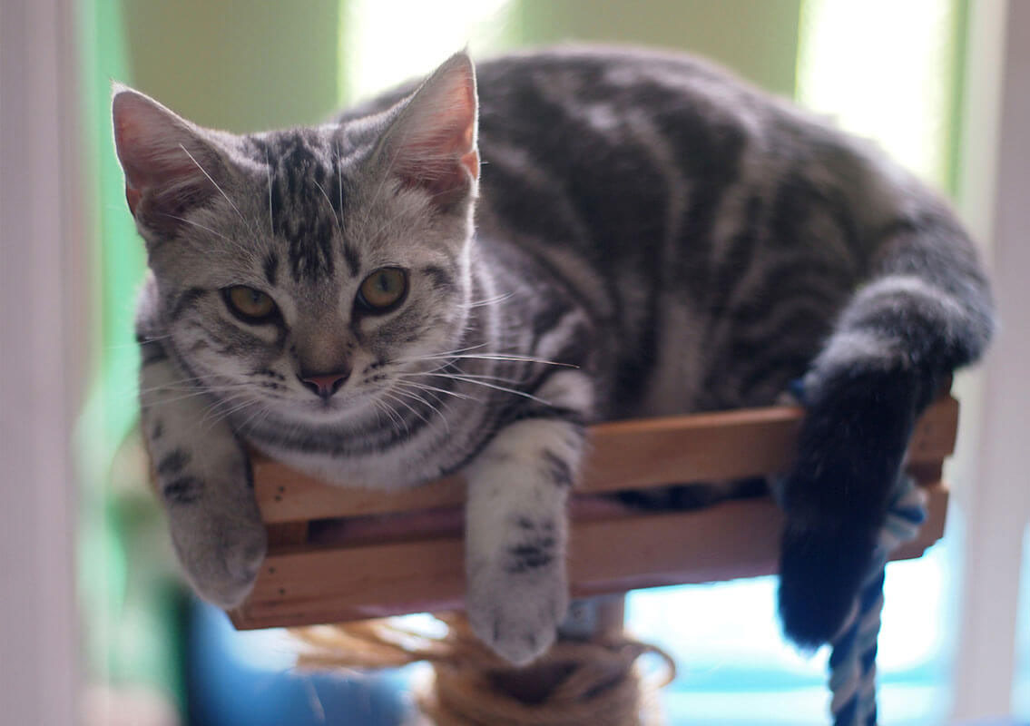 Is Silica Gel Cat Litter Safe