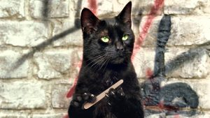 Cat Judge