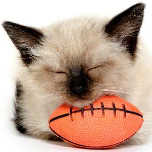 football-cat