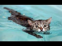 cat-in-water2