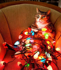 christmaslightscat
