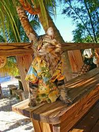 HawaiianCat